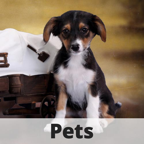 Pet Photographer South Florida